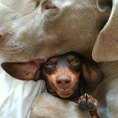 wiener hug...