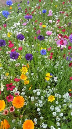 Amazing Flowers, Pretty Flowers, Wild Flowers, Beautiful Flowers Wallpapers, Flower Phone Wallpaper, Colorful Plants, Flower Aesthetic, Flower Pictures, Garden Inspiration