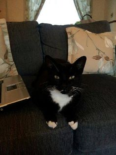 **MISSING CAT, LANELAY AREA OF TALBOT GREEN – BUT COULD BE ANYWHERE AROUND** All black apart from white paws, tummy and tie area. 8 year old male called Socks. Please share, his family are missing him!
