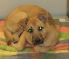 08-113 (08/22/13) is an adoptable Shepherd Dog in Akron, OH. Adopting a friend~ Dogs (and puppies) are $ 90.00 : $ 76.00 for the adoption / $ 14.00 for the licenses Cats (and Kittens) are $60.00 : $60...