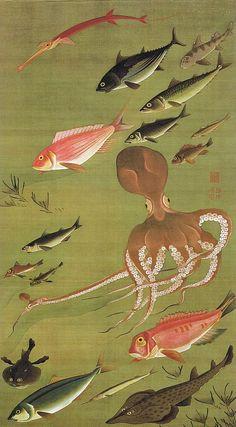 """動植綵絵 第三期 ( 1765-1766 ) ,27. 群魚図(蛸)[ぐんぎょず たこ], """"Pictures of the Colorful Realm of Living Beings"""", Jakuchu Ito"""