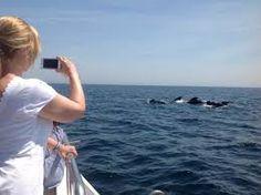 Image result for dolphin safari gibraltar