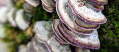 Fungi: friend or foe? | Naples Botanical Garden Natural Shapes, Fungi, Naples, Botanical Gardens, Mushrooms