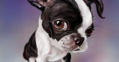 Boxing Boston Terrier PS by nosoart | Man's Best Friend! | Pinterest | Boston Terriers, Boxing and Terriers