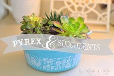 Pyrex & Succulents by hkatee