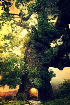 Tree Portal, The Enchanted Wood photo via diaries