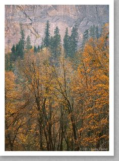 Oaks and Cathedral Rock, Autumn, Yosemite