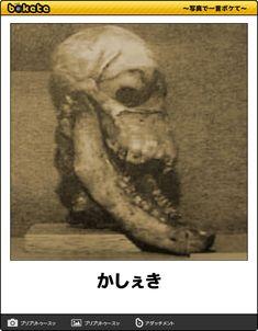 かしぇき - 2016年02月29日の人物のボケ[40034507] - ボケて(bokete)