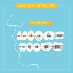 43 Best Dental Infographics images | Dental, Dental facts ...