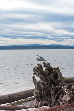 A local shares all the best things to do on Camano Island, Washington, including the best restaurants, hikes, beaches, and attractions. If you are looking for the best islands near Seattle, add this island near Whidbey Island to your Seattle day trips list! #camanoisland #camanoislandwashington #camanoislandmap #islandsnearseattle #islandsoffseattle #seattleislandsdaytrips #bestislandsnearseattle #whidbeyisland #whidbeyislandthingstodo #seattledaytrips Camano Island, Washington State, Weekend Getaways, Pacific Northwest, Day Trip, British Columbia, Travel Usa, Travel Guides, Bald Eagle