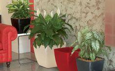 Le marc de café, c'est un peu notre produit économique chouchou à la rédaction de Comment-Economiser.fr. Utile partout, aujourd'hui on vous propose une super astuce de grand-mère pour l'utiliser sur vos plantes.  Découvrez l'astuce ici : http://www.comment-economiser.fr/marc-cafe-plantes-grand-mere.html