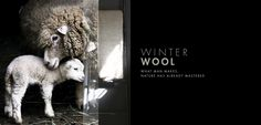 Winter Wool Moodboard | Weylandts Weylandts, Winter Wonder, Mood Boards, Great Places, Beautiful Pictures, Africa, Seasons, Wool, How To Make