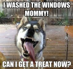 Huskey washes windows
