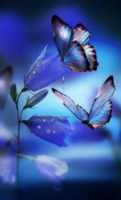 Photo of Orange Butterfly for fans of Butterflies 39801266 Butterfly Wallpaper, Butterfly Flowers, Blue Butterfly, Beautiful Butterflies, Blue Flowers, Beautiful Butterfly Pictures, Butterfly Photos, Beautiful Nature Wallpaper, Pretty Wallpapers