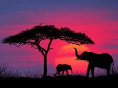 u00a9David Davis - www.allposters.com/-sp/Silhouette-of-Elephants-and-Tree-Posters_i3543027_.htm