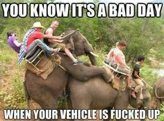 Funny photos, funny videos, awesome art and design. Plus other cool and weird internet humor. Funny Elephant, Elephant Ride, Elephant Trekking, Happy Elephant, Elephant India, African Elephant, Very Funny Pictures, Funny Photos, Hilarious Stuff