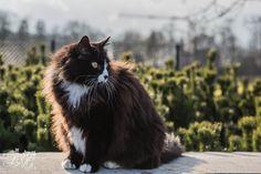 Prinses Kat | Pawshake