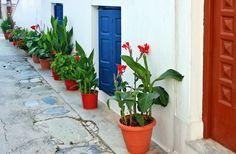 *** Alley with flowers - Town of Skopelos ***  by Finn Lyngesen flfoto…