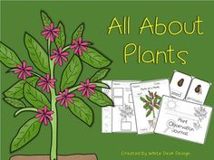 All About Plants {Informational} White Desk Design, All About Plants, Parts Of A Plant, Vocabulary Cards, Plant Needs, Spring Is Here, Graphic Organizers, Life Cycles, Garden Tools