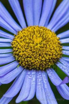 Wild Flower, Mount Rainier National Park • Bob Nobl, via Flickr