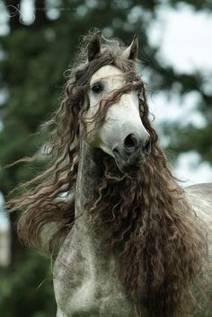 Curly hair problem # 501 When this horses hair looks better than yours.