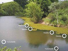 Dicas » Dez dicas para pescar traíras | Cia da Pesca - Camping