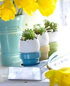 Easter succulents. I love it - the bases are painted mini terra cotta flower pots!