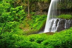 Silver Falls is the gem of the Oregon State Park system