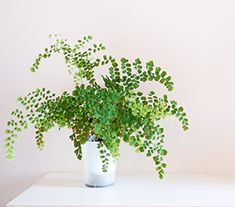 Top 10 Indoor Plants Hanging Plants, Indoor Plants, Mother In Law Tongue, Swiss Cheese Plant, Fertilizer For Plants, Types Of Succulents, Peace Lily, Monstera Deliciosa, Low Maintenance Plants