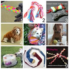 Roundup of DIY Dog Toys, accessories, etc…: I like #7 for a doggy daycare