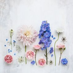 Floral flatlay © Cristina Colli Blog post: behind the scenes of a still life #flatlay #flowers #floral #photography fine art