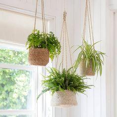 11 Best DIY Hanging Basket Planters for Home Decor Indoor Hanging Baskets, Hanging Pots, House Plants Hanging, Ikea Hanging Planter, Hanging Ferns, Hanging Gardens, House Plants Decor, Plant Basket, Plant Pots