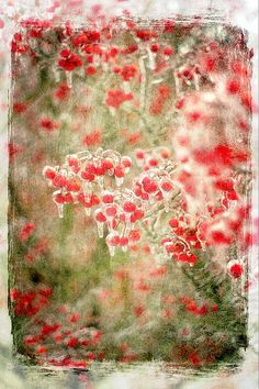 Wintery Red Berries, print by Suzanne Powers, $22.00