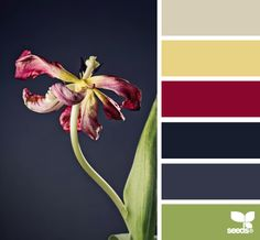 trend colors from images in http://design-seeds.com/