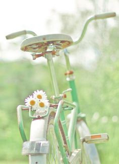 This is so beautiful! Daisies make any photo summery