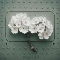 Floral - Patrick Kramer