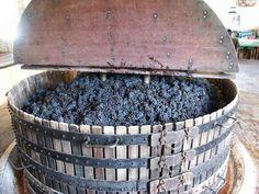 Pressoir Coquard (800×600) Raisin, Champagne, France, Canning, Wine Press, Traditional, Fall Season, Home Canning
