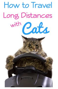 How to Travel Long Distances with Cats - Simply Stacie