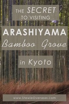 The Secret To Visiting Arashiyama Bamboo Grove In Kyoto Japan - The famous bamboo grove in Kyoto gets crowded during the day, and it's nearly impossible to get a photo without other tourists in it. I discovered a secret to avoiding the throngs of tourists - you need to visit at the right time of the day! Click to read more! #arashiyamakyoto #japantravelkyoto #japantraveltips #bamboogrove