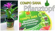 COMPO SANA Pflanztopf - Susi und Kay Projekte