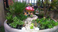 Meu mini Jardim!