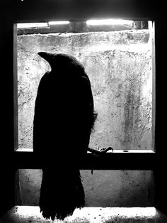"""""""'What do you fear my lady? ''A cage. To stay behind bars until use and old age accept them and all chance of valor has gone beyond recall or desire'"""" (J.R.R. Tolkien) #raven #Black, #Solitude"""
