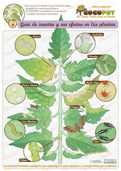 Three Natural Gardening Tips To Get The Best Results Sacred Garden, Eco Garden, Natural Garden, Garden Care, Edible Garden, Garden Insects, Garden Pests, Organic Horticulture, Organic Gardening