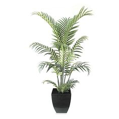 Spice up the look of your home or office with a welcome touch of life-like greenery with this delightful potted Areca Palm Tree standing 42 tall.