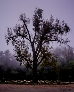 Not a true landscape, I suppose. I went to Pony Pasture in Richmond, VA on a foggy morning. The river was so socked in by fog that any photo I took would turn out plain white. As I was walking back to the car, I saw this tree in the parking lot. I never thought I could get a cool pic in a parking lot!