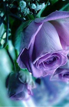 Tumblr; La Rosas :