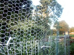 Garden outdoor spaces on pinterest veggie gardens - How to keep raccoons out of garden ...