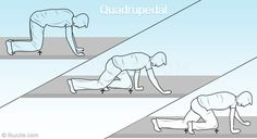 Quadrupedal Movement (Crawling)