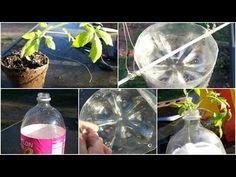 Como plantar tomates en botella de plástico Paso a Paso muy fácil - YouTube