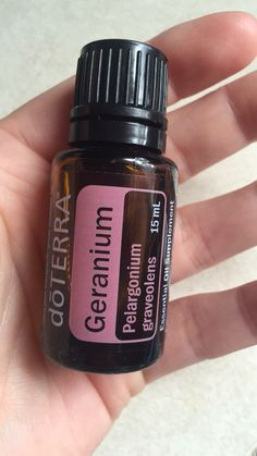 Geranium Essential Oil - great for ticks. Place drops on shoes and use diluted oil mixed with fractioned coconut oil and rub on skin for bugs. Put a few drops on dogs collar to repel bugs and ticks. Coconut Oil For Fleas, Coconut Oil For Teeth, Coconut Oil Uses, Organic Coconut Oil, Organic Oil, Geranium Oil, Geranium Essential Oil, Doterra Geranium, Coconut Oil Skin Benefits